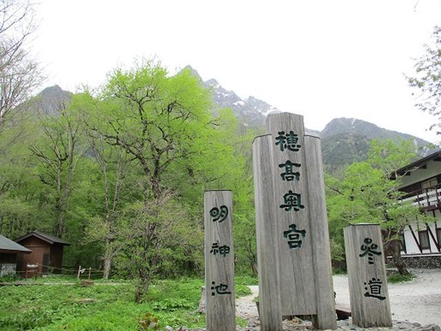 画像7: 【山旅会】ニリンソウ咲く上高地