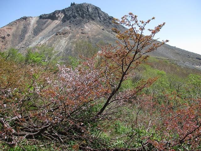 画像7: 【山旅会】那須