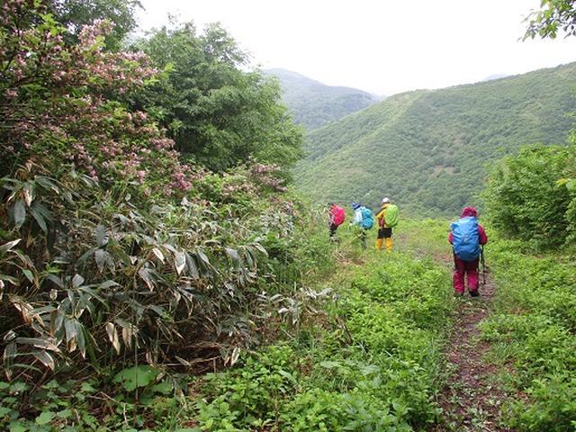 画像5: 【山旅会】擬宝珠山と象山