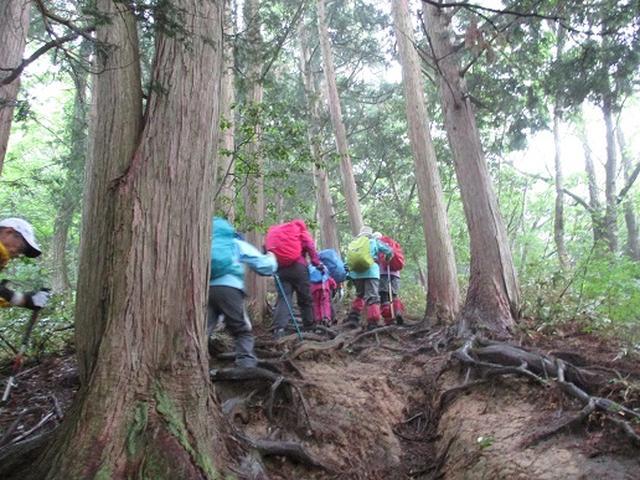 画像4: 【山旅会】中蒜山