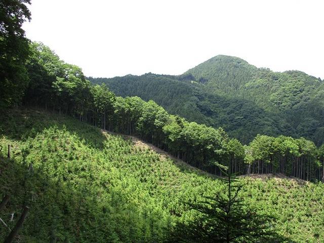 画像7: 【山旅会】金毘羅尾根から日の出山