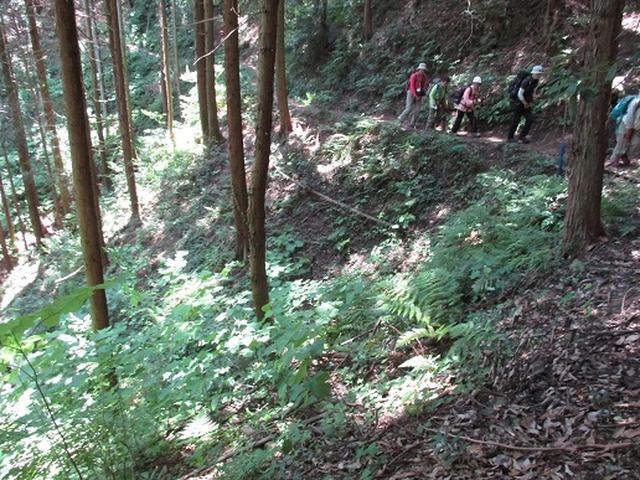 画像5: 【山旅会】金毘羅尾根から日の出山