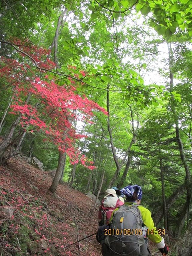 画像12: 【山旅会】日光高山