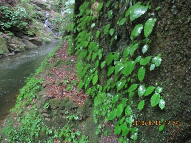画像5: 【山旅会】赤目四十八滝