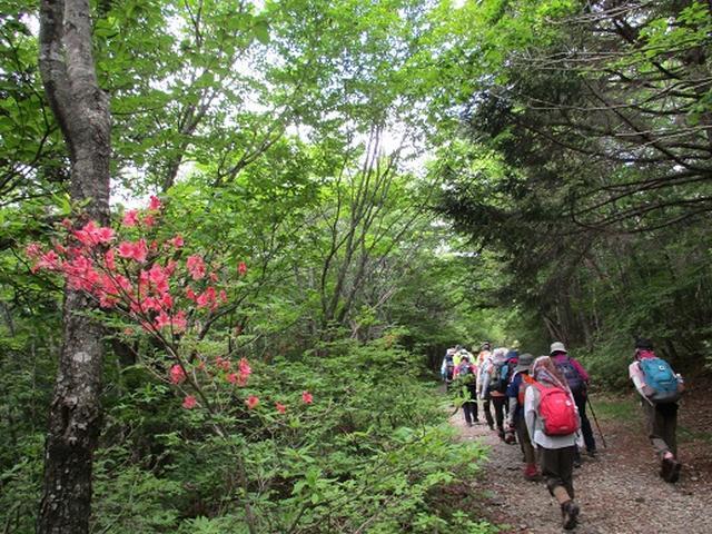 画像2: 【山旅会】八方ヶ原