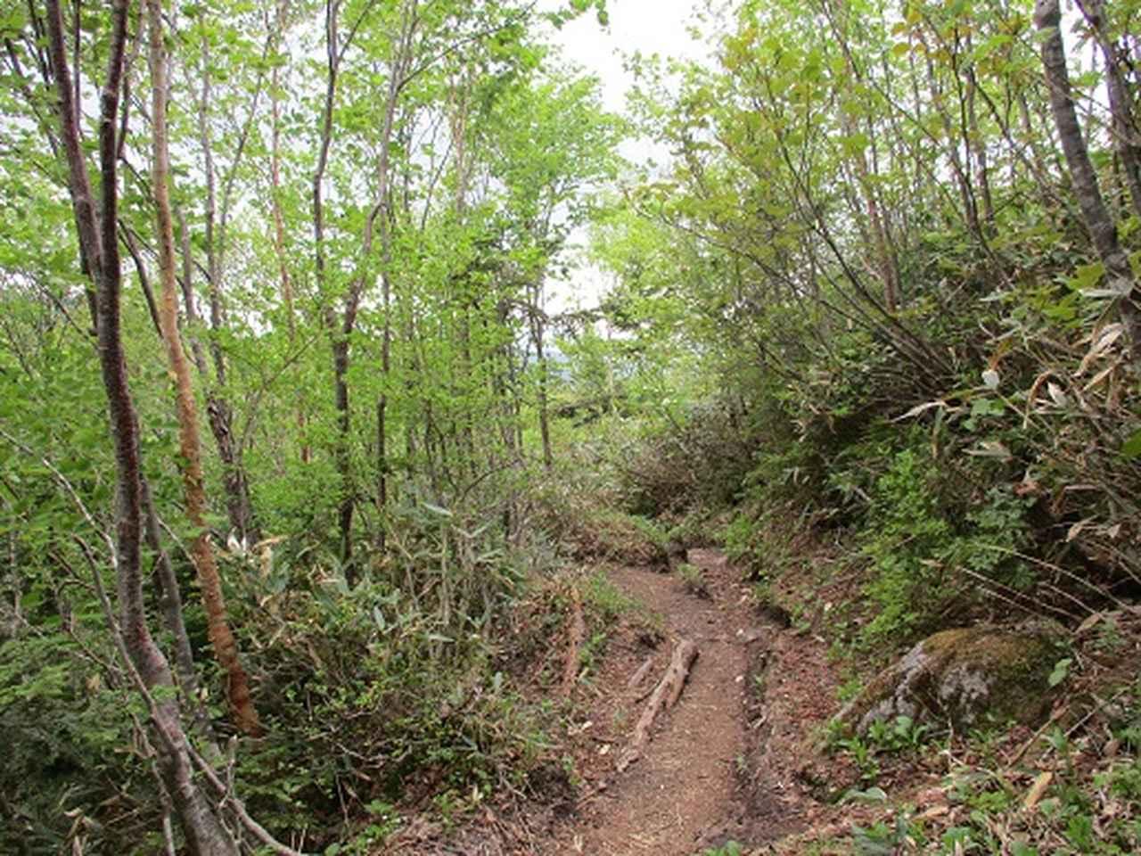 画像8: 【山旅会】帝釈山と田代山