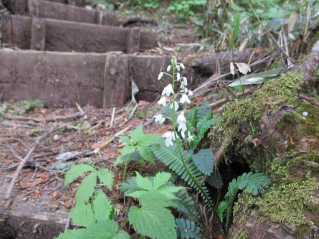 画像2: 【山旅会】帝釈山と田代山