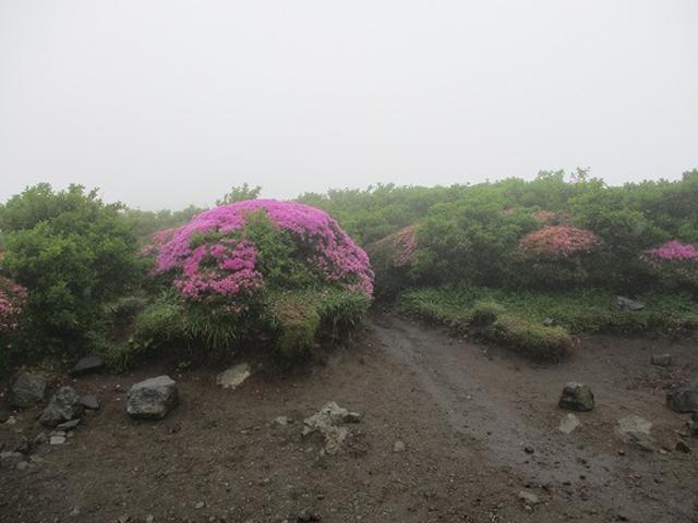 画像4: 【山旅会】九重山 その2
