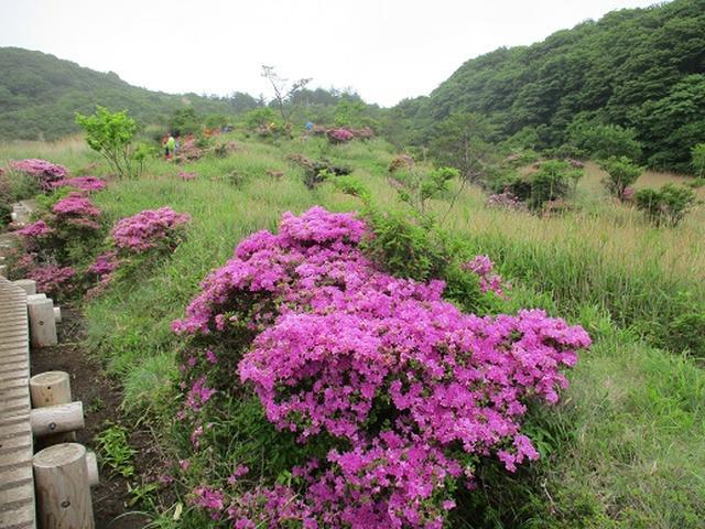 画像5: 【山旅会】九重山 その1