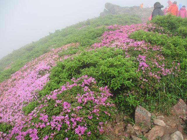 画像7: 【山旅会】九重山 その3