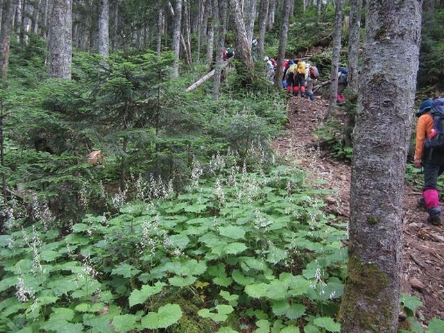 画像3: 【山旅会】蝶ヶ岳ツアーのご案内