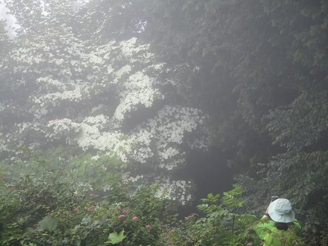 画像7: 【山旅会】大霧山