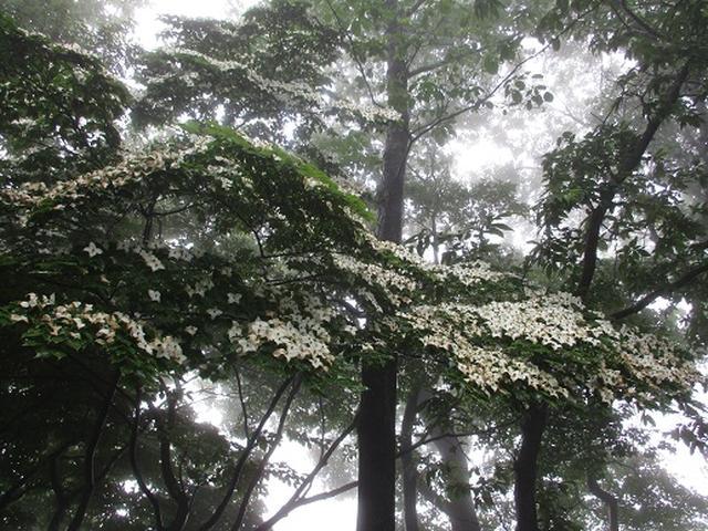 画像6: 【山旅会】大霧山