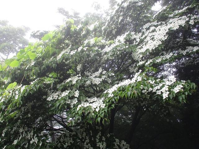 画像8: 【山旅会】大霧山