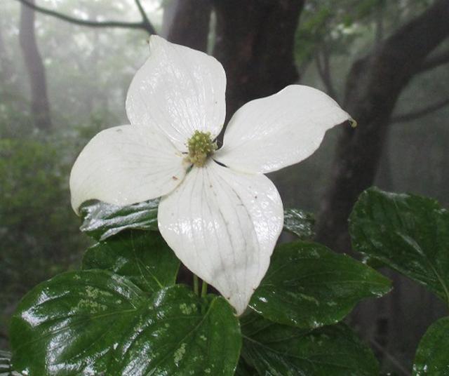画像9: 【山旅会】大霧山