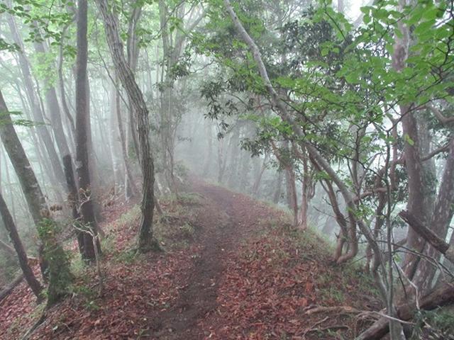 画像7: 【山旅会】鋸山から大岳山 下見報告