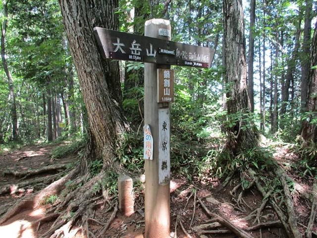 画像12: 【山旅会】鋸山から大岳山 下見報告