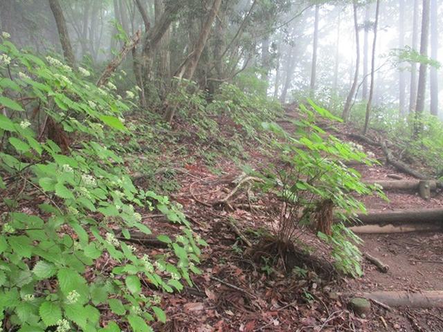 画像4: 【山旅会】鋸山から大岳山 下見報告