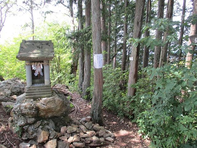 画像13: 【山旅会】鋸山から大岳山 下見報告