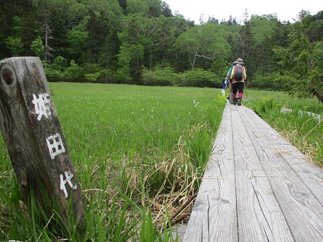 画像5: 【山旅会】尾瀬・上田代ハイキング 添乗報告