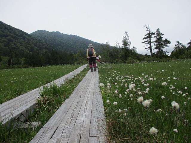 画像8: 【山旅会】尾瀬・上田代ハイキング 添乗報告