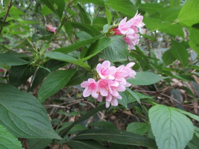 画像3: 【山旅会】安達太良山 ツアー実施報告 その1