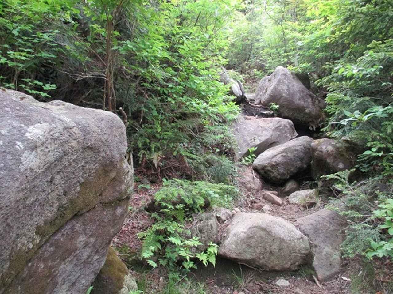 画像7: 【山旅会】志賀山の下見に行ってきました!