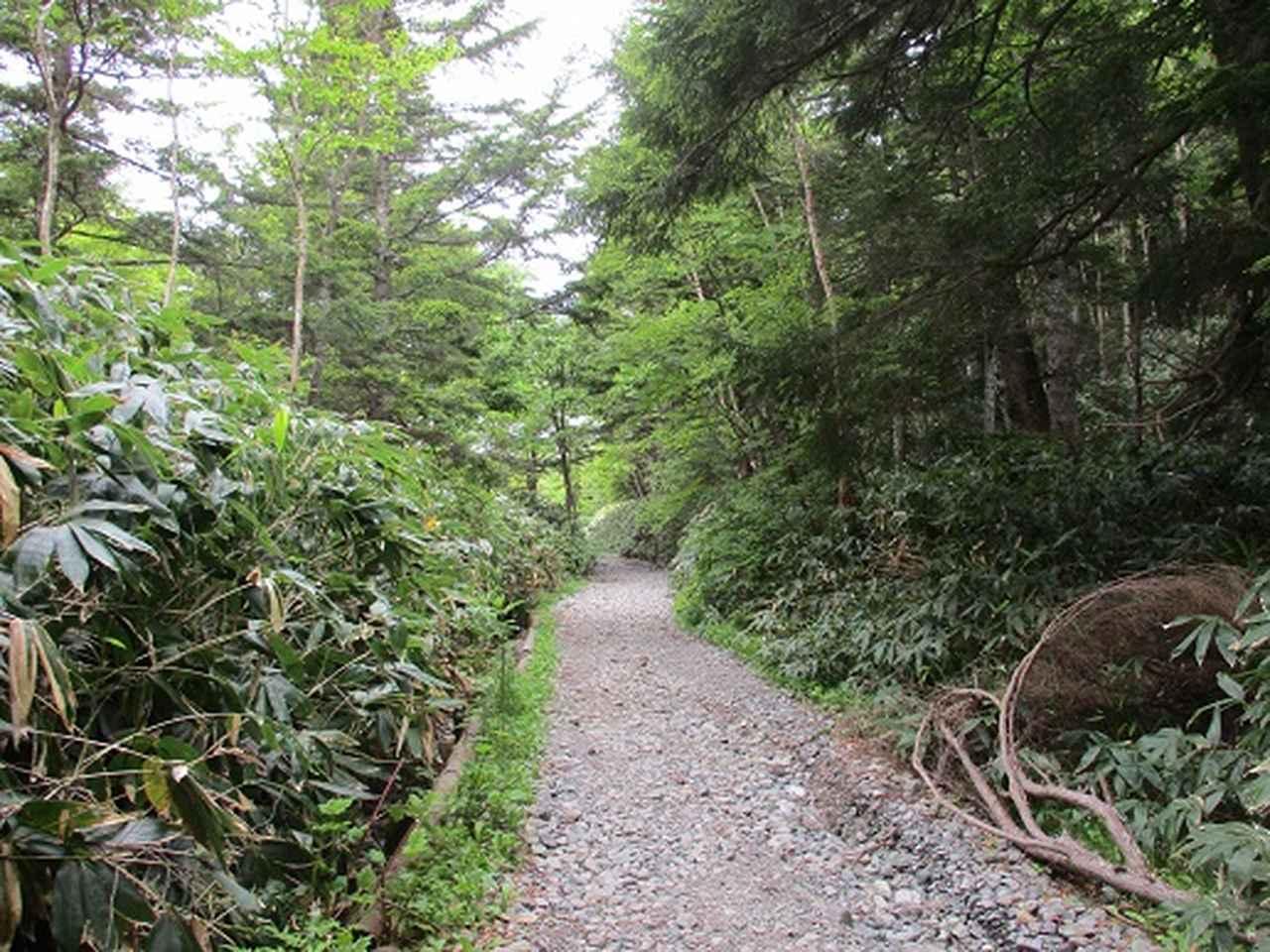 画像3: 【山旅会】志賀山の下見に行ってきました!