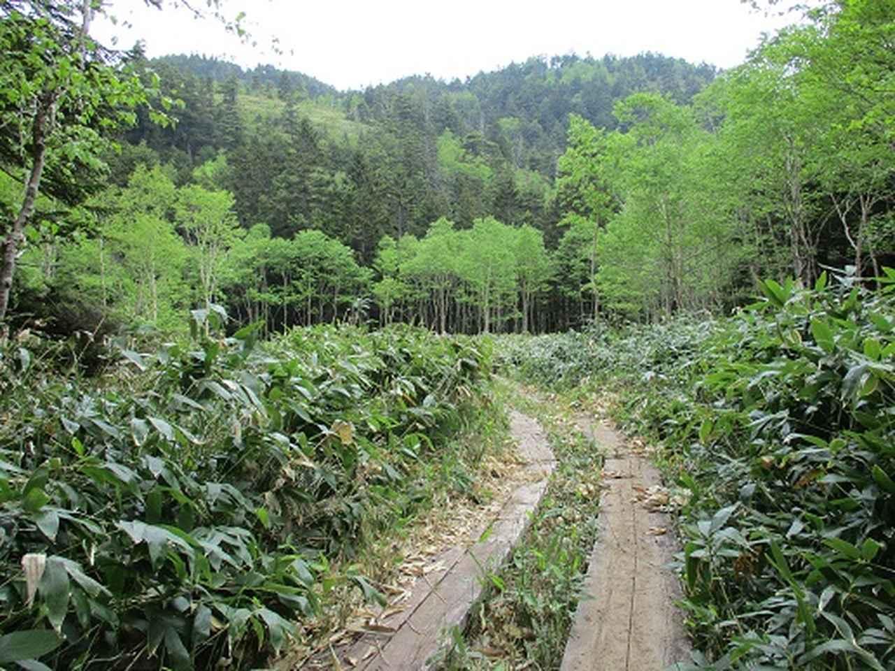 画像5: 【山旅会】志賀山の下見に行ってきました!