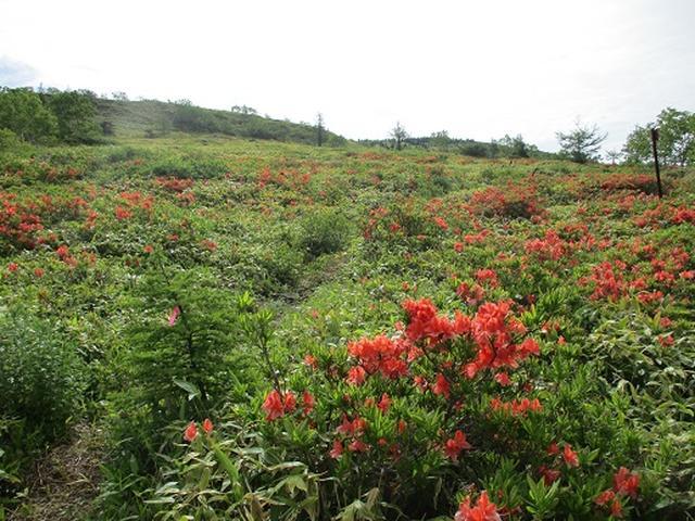 画像6: 【山旅会】根子岳の下見に行ってきました!