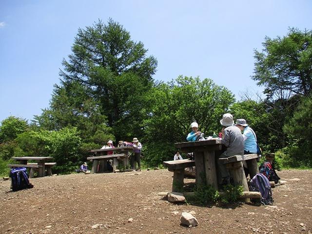 画像8: 【山旅会】天女山から美し森 添乗報告