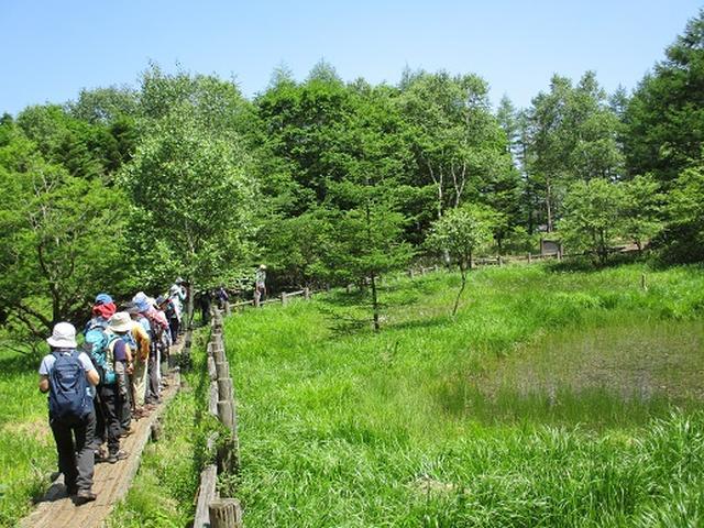 画像10: 【山旅会】天女山から美し森 添乗報告