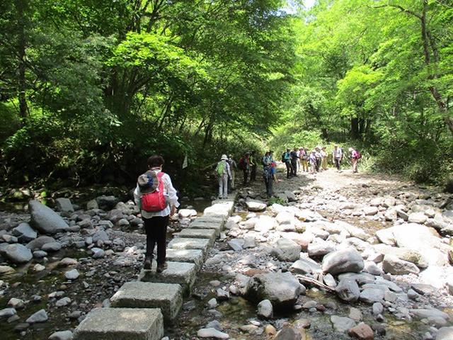 画像9: 【山旅会】天女山から美し森 添乗報告