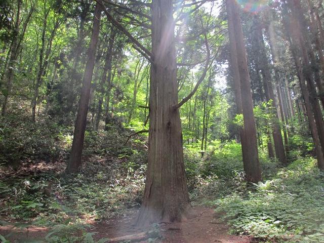 画像3: 【山旅会】姫神山へ下見に行ってきました!