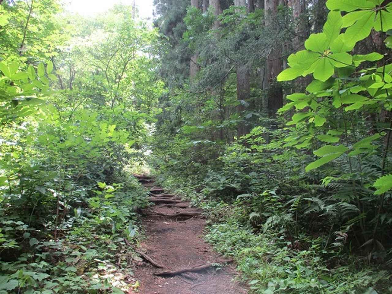 画像2: 【山旅会】姫神山へ下見に行ってきました!