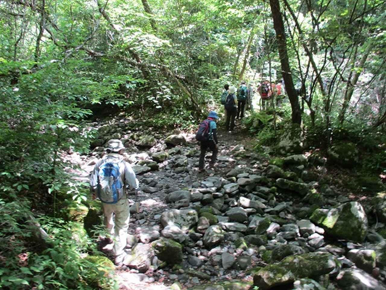 画像3: 【山旅会】天女山から美し森 添乗報告