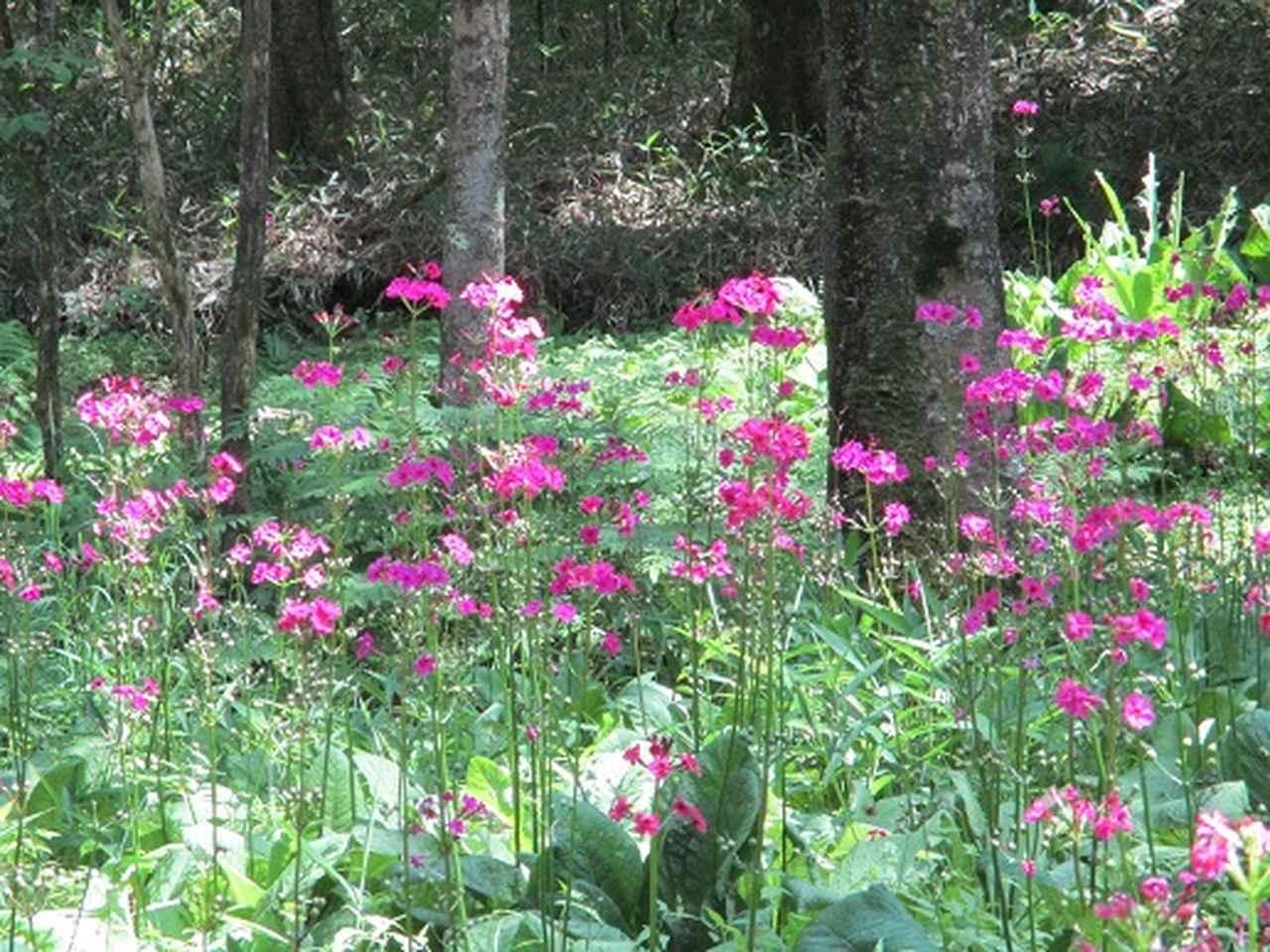 画像13: 【山旅会】天女山から美し森 添乗報告