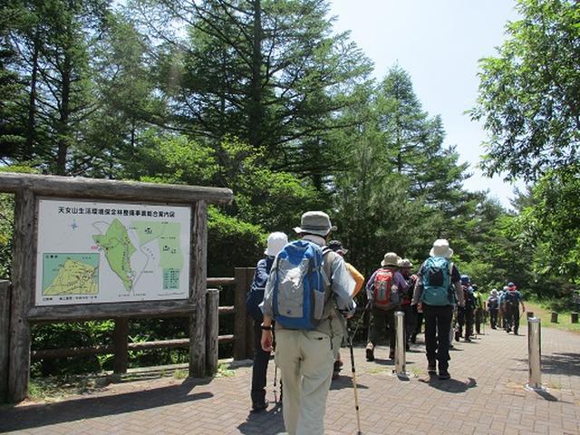 画像1: 【山旅会】天女山から美し森 添乗報告