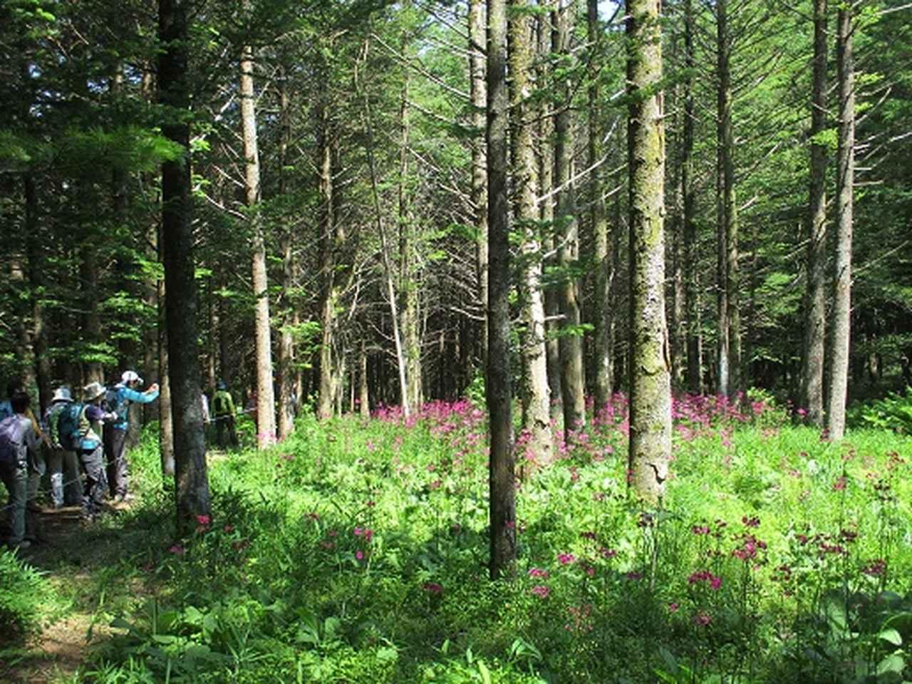 画像12: 【山旅会】天女山から美し森 添乗報告