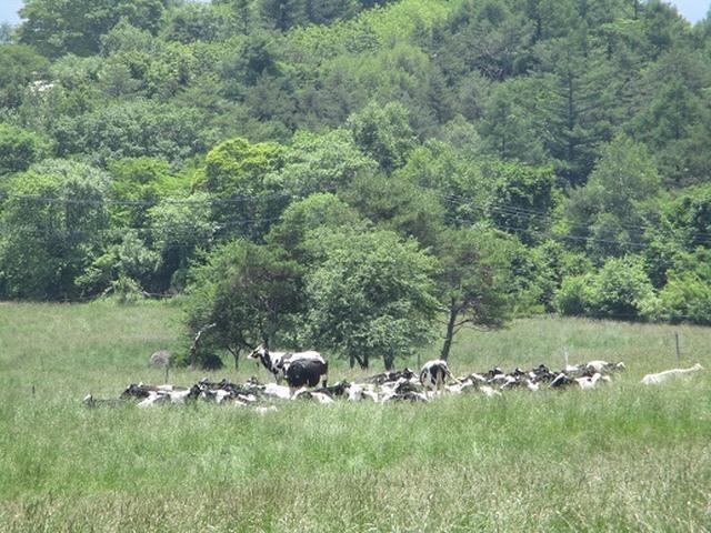 画像5: 【山旅会】天女山から美し森 添乗報告
