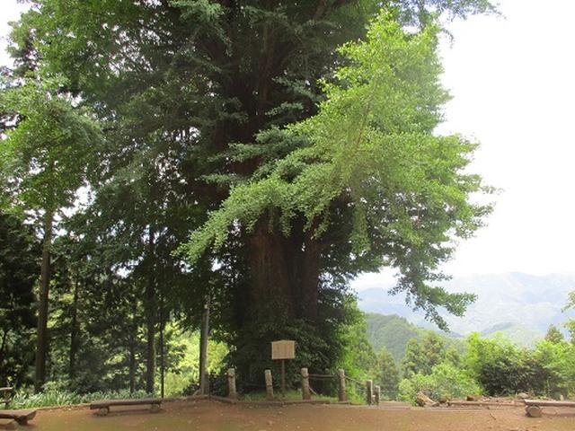 画像4: 【山旅会】関八州見晴台へ下見に行ってきました!