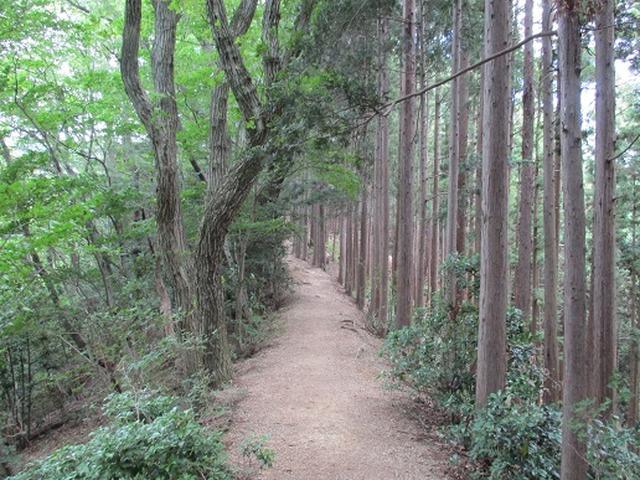 画像3: 【山旅会】関八州見晴台へ下見に行ってきました!