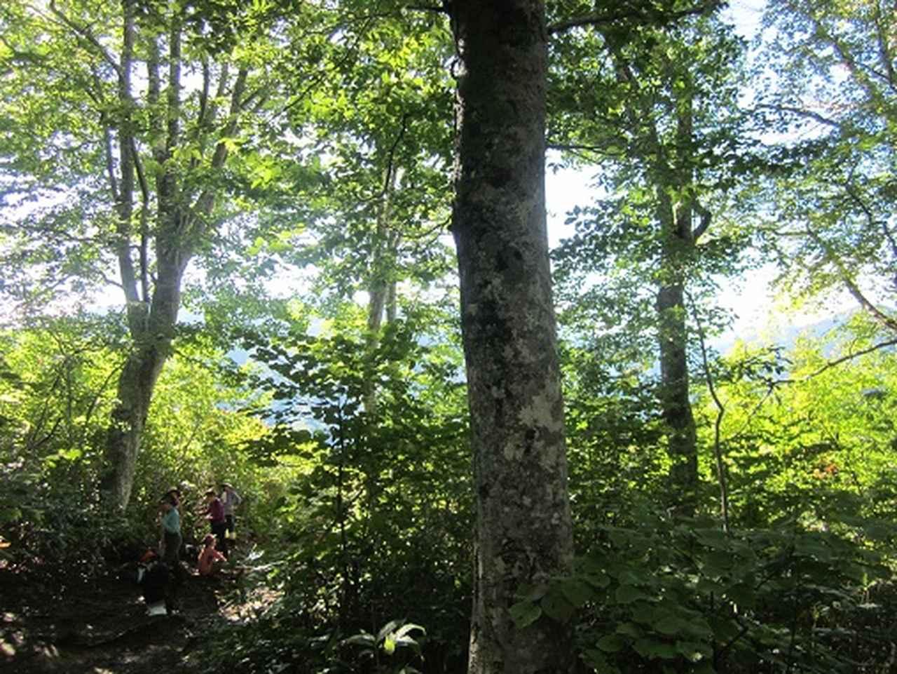 画像4: 【山旅会】9月の山旅会「会津駒ヶ岳」のご案内