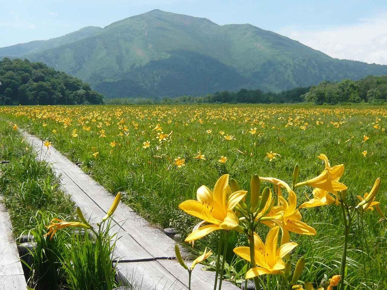 画像: ニッコウキスゲの咲く尾瀬(イメージ)