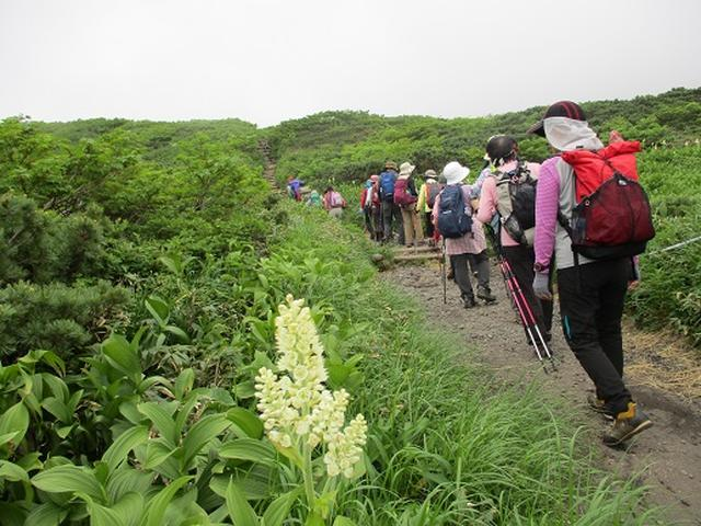 画像7: 【山旅会】秋田駒ヶ岳にいってまいりました!(その1)