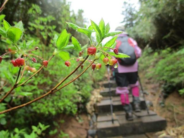 画像6: 【山旅会】八幡平ツアーにいってまいりました!(その1)