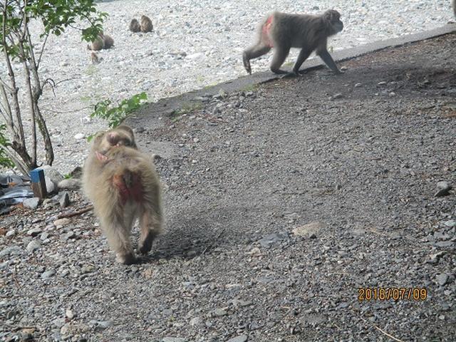 画像16: 【山旅会】蝶ヶ岳ツアーの下見にいってまいりました!