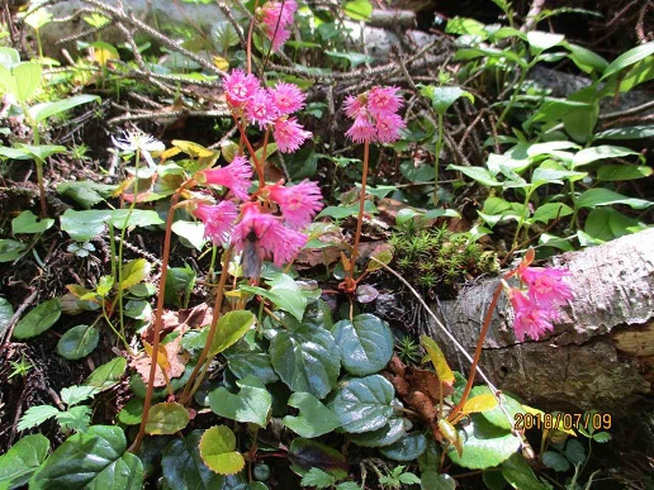 画像8: 【山旅会】蝶ヶ岳ツアーの下見にいってまいりました!