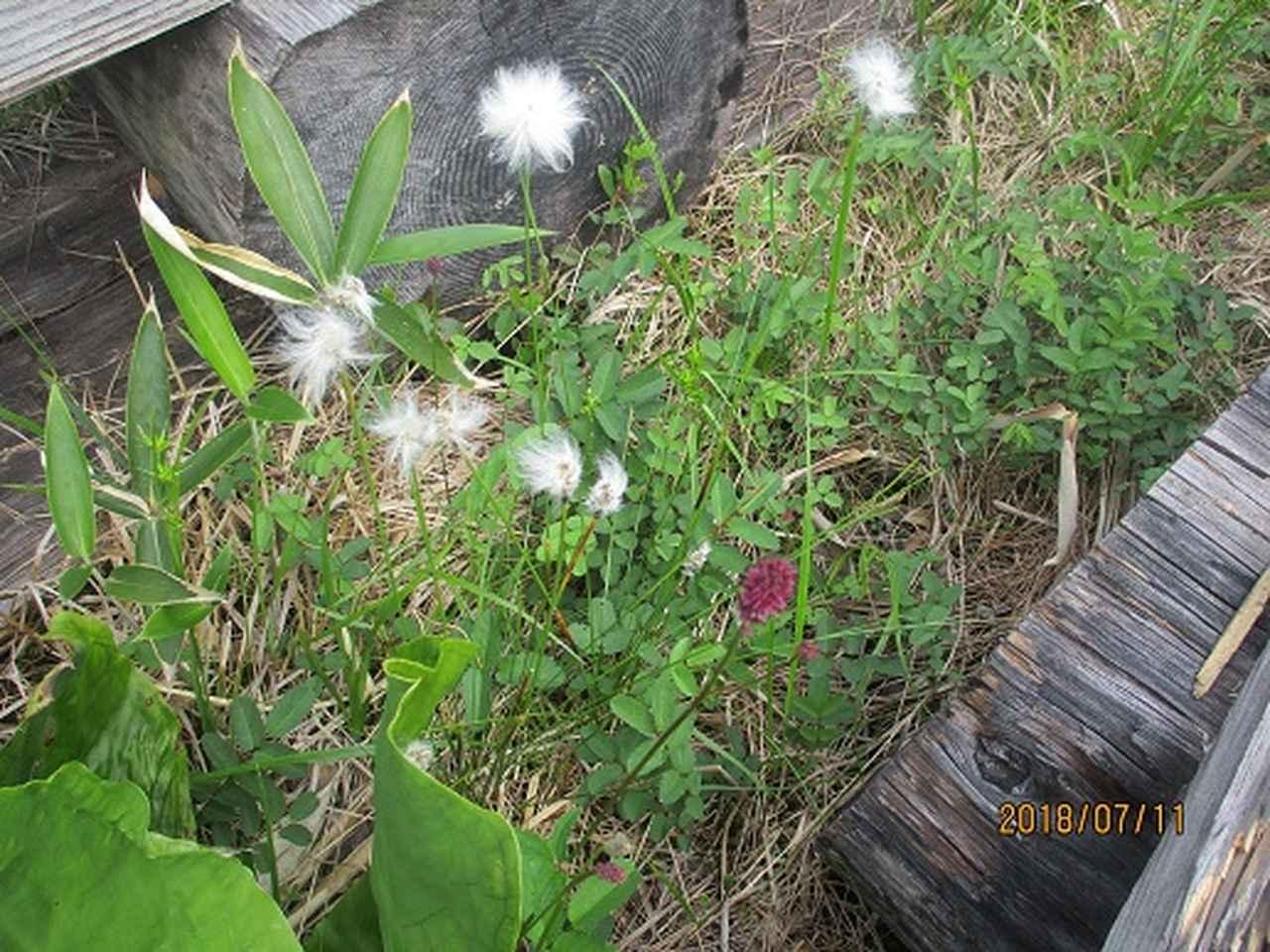 画像13: 【山旅会】志賀山と裏志賀山にいってまいりました!