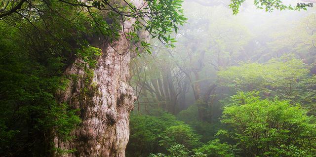 画像: 縄文杉にであい隊ツアー・旅行|あるく国内|クラブツーリズム